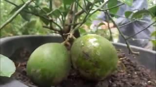 Video INDAHNYA BERBAGI Part 5 Cara Mengaplikasikan Nature Stek Perangsang Bunga & Buah download MP3, 3GP, MP4, WEBM, AVI, FLV Juli 2018