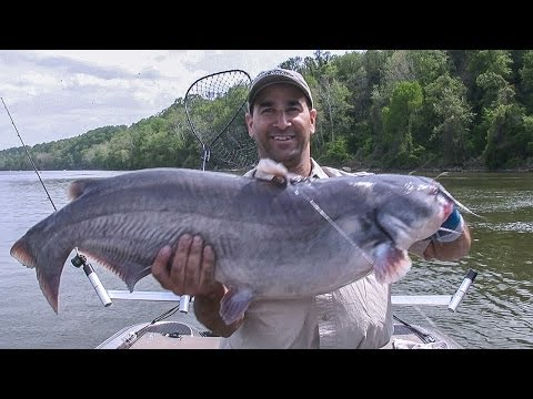 Potomac River Blue Catfish (Tidal River Fishing)