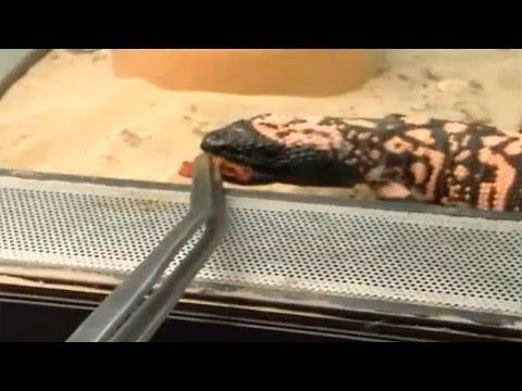 Madrid Distrito Animal: La noche en el zoo