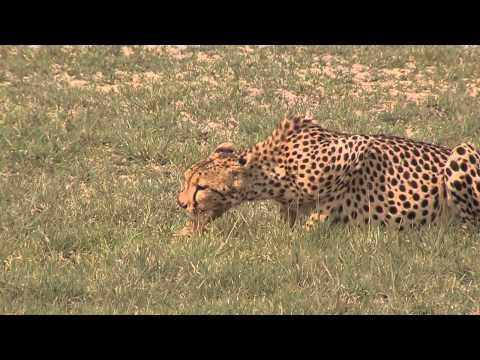 Exploring Nxai Pan National Park in Botswana