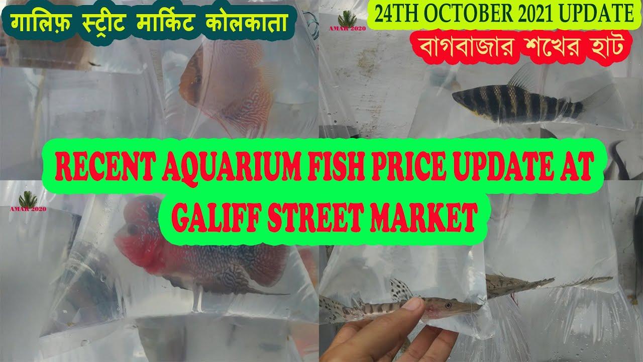 GALIFF STREET AQUARIUM FISH MARKET KOLKATA | RECENT AQUARIUM FISH PRICE | 24TH OCTOBER 2021 VISIT