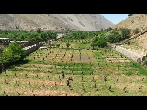 Modern Agriculture is Changing the Lives of Afghan Farmers