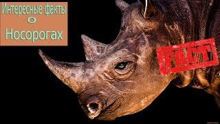Интересные факты 10 Фактов о Носорогах