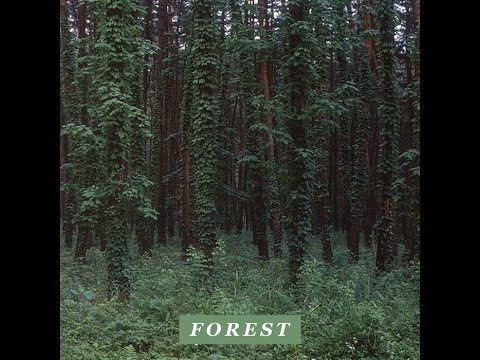 Driver - Forest [Full BeatTape]