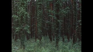 Download Driver - Forest [Full BeatTape]