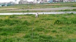 多摩川河川敷.