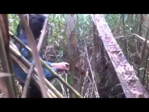 Một chuyến ăn ong rừng u minh 1