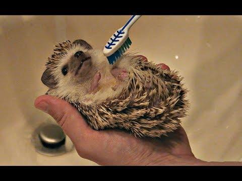 Pamper Your Hedgehog