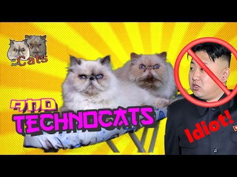 Two Stupid Cats – Episode 11  – TECHNO CATS VS. NORTH KOREA –  Funny Fail Persian Cat Video
