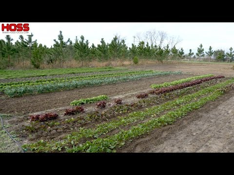 How To Design And Layout Your Dream Vegetable Garden