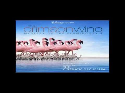 The Crimson Wing: Mystery of the Flamingos : The Arrival of the Birds