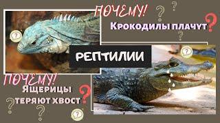 Класс Рептилии. Пресмыкающиеся животные. Отряд Черепахи, Ящерицы. Виды Признаки Биология 7 класс ЕГЭ