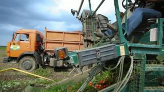 «Помидорка» процесс производства томатной пасты