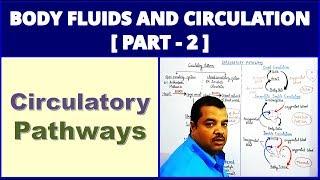 Body Fluids and Circulation for NEET | Part 2 | Circulatory Pathways