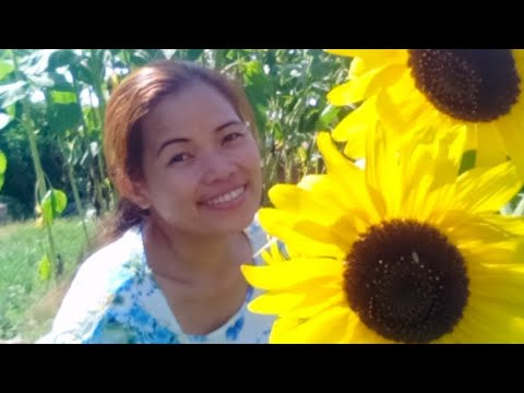 Live Tayo Guys With Sunflowers In My Yard Background..