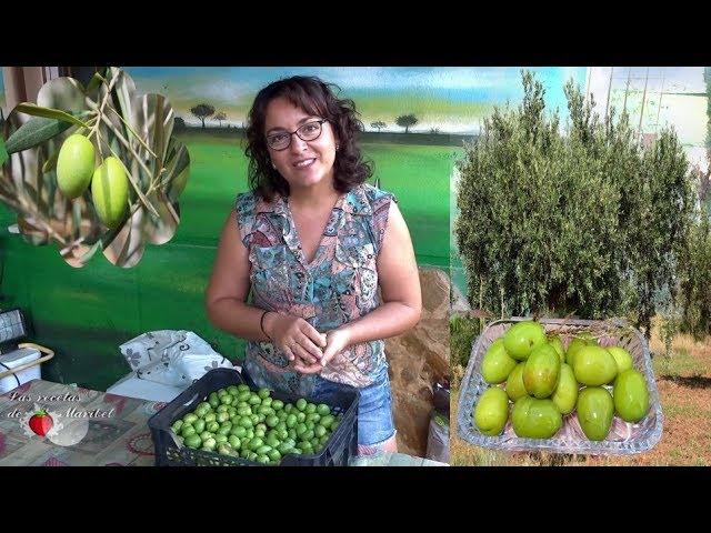 Aceitunas Verdes Curadas En Sosa Caustica Curar Aceitunas En Casa Youtube