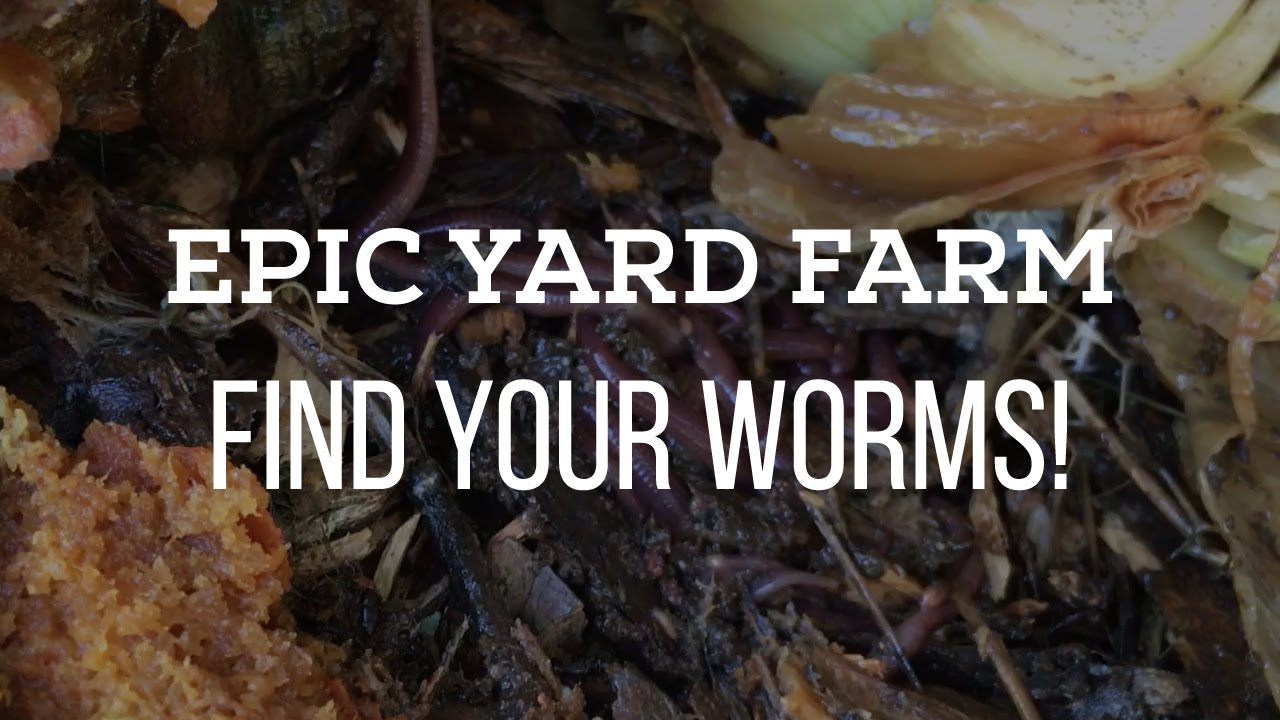 attract earthworms in your garden