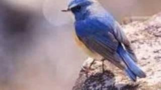 桜田淳子さんの「わたしの青い鳥」をAMIさんの演奏で歌わせていただ...