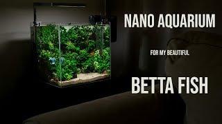 NANO AQUARIUM FOR MY BEAUTIFUL BETTA FISH