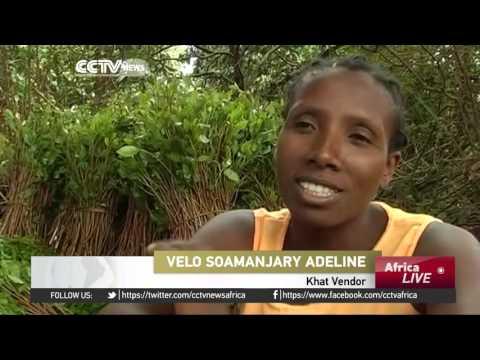 Madagascar khat addict numbers soar, food production dips