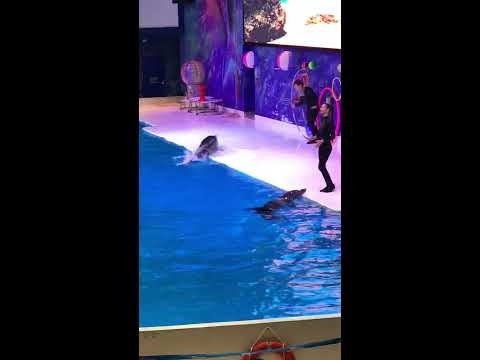 Dubai Best Dolphinarium : Educational Trip