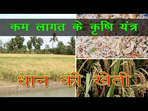 Low Cost Equipment For Rice Cultivation | कम लागत के कृषि यंत्र | Rice Cultivation In India