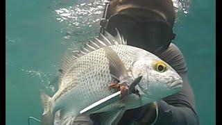 Spearfishing Palm Beach County: Part 2 Boynton Inlet