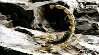 trippanosomatid parazita rovarok és pókok paraziták tisztítására