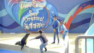 Dolphin and sea lion show at Ocean Park Hong Kong on 11 Feb 2011