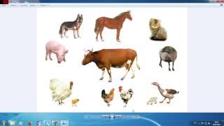 Где живут и что едят домашние животные