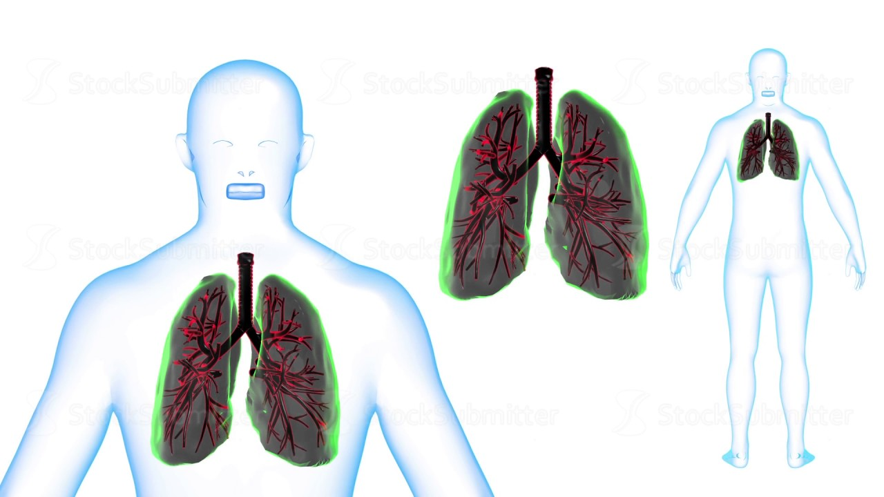Human Body Lungs X Ray Effects Loop Rotation 3d Render Youtube Diagram