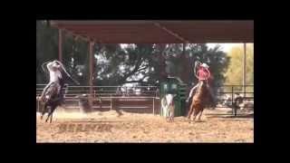 Cowboy - 8yo Sorrel Head & Heel Horse For Sale