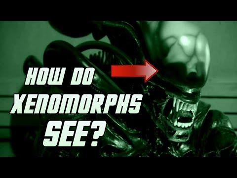 How Do Xenomorphs See? - Explained