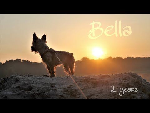 Bella 2 years dog tricks