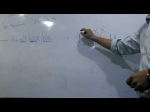 conversion of non deterministic to deterministic grammer