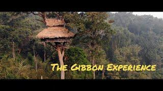 Travel Vlog Thailand 4 The Gibbon Experience