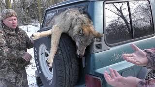 Охота на волка (Часть 2) | По волчьему следу | Добыли два волка | Wolf hunting 2018