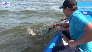 Nghề câu kiều vùng biển Miệt Thứ Kiên Giang | Fishing
