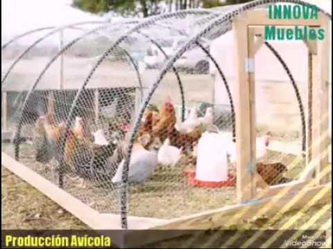 Gallineros para Producción Avícola (Imagen Ilustrativa)