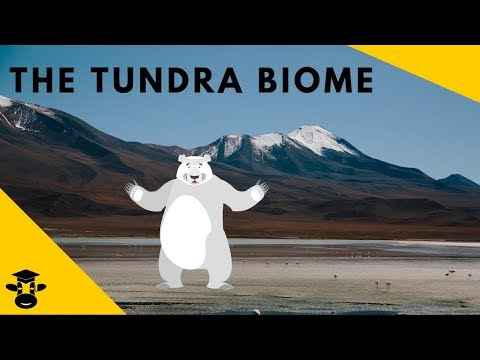 The Tundra-Biomes of the World