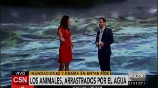C5N - Agro: Animales arrastrados por el agua en Diamante Entre Ríos