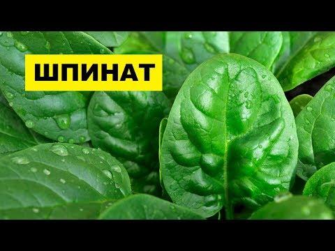 Выращивание Шпината в открытом грунте как бизнес идея