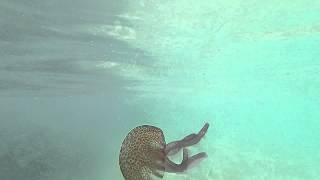Jelly Fish Cala Egos Majorca July 2014 - 1080p HD