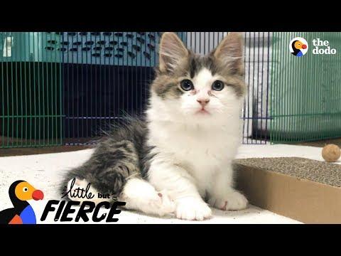 Fuzzy Kittens Help Each Other Learn To Walk | The Dodo Little But Fierce