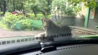 Как разбудить кота на капоте
