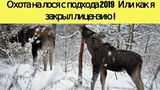 Охота на лося с подхода 2019