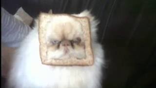 bread the cat
