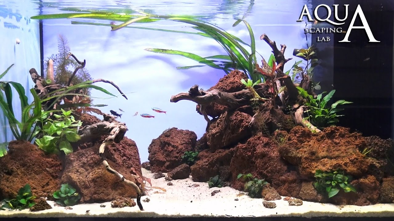 Aquascaping Lab - Tutorial Natural Aquarium Volcanic rocks ...