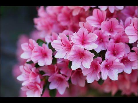 Какие цветы нельзя ставить в спальне