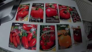Пикировка и обзор томатов для теплицы.